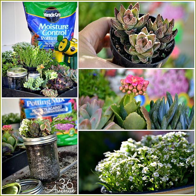 Super cute DIY Mini  Garden... This would make such a cute gift! the36thavenue.com