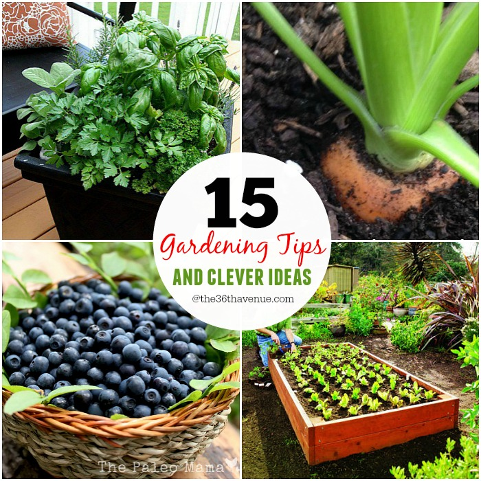 Gardening Ideas at the36thavenue.com