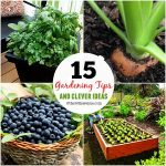 15 Gardening Tips and Clever Ideas