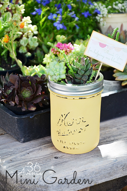 DIY Spring Projects - Mini Succulent Garden in a Jar. Adorable!